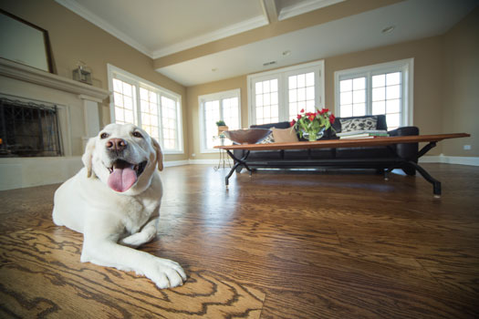 Engineered hardwood flooring and solid hardwoods have a factory-finished protective layer to help resist stains and soiling