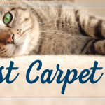 best carpet for cats