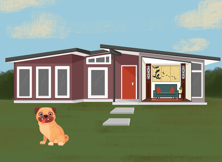 A pug at its mid century style home